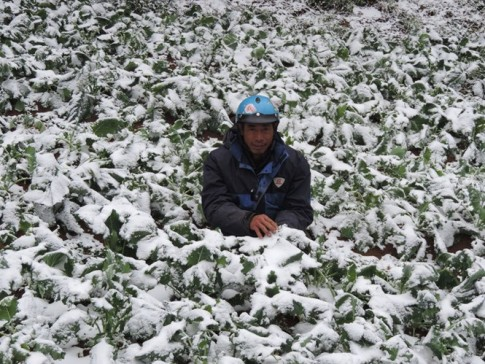 A farmer in Lao Cai Province in his vegetable garden which has been covered in snow January 24