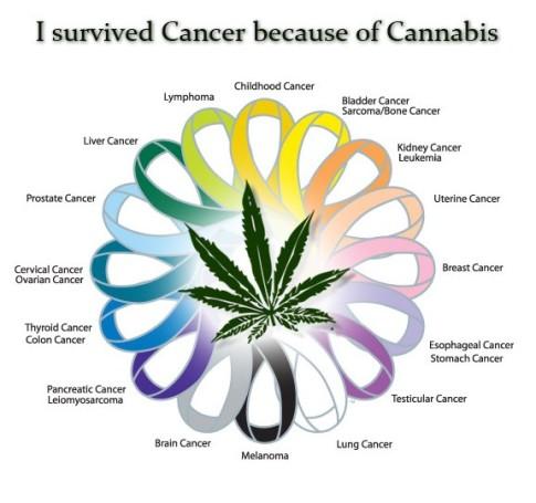 Cancer-Cannabis