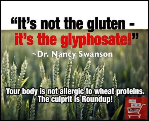 Glyphosate-Gluten-Roundup-Monsanto