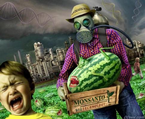 Monsanto-GMO-Crop
