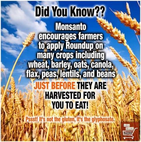 Monsanto-Roundup-Glyphosate-Gluten
