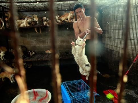 china-yulin-festival-cats-dogs