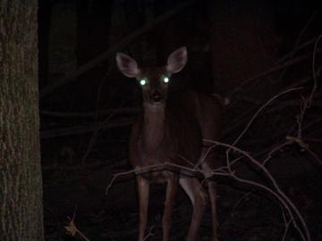 deer headlights