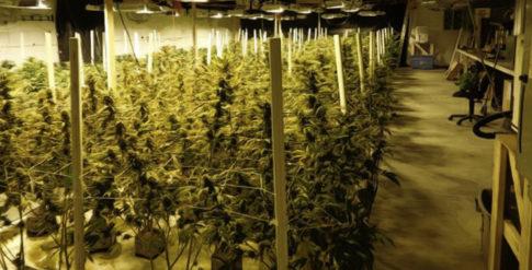 Alaska Man Sentenced to 60 days in Jail for Growing $1.5 Million in Pot