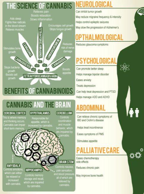 cannabis-cbd-brain-health-science