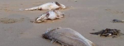 vietnam_dead_fish_feat