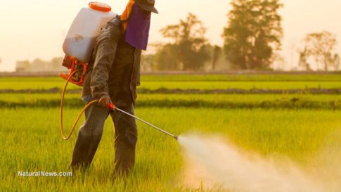 Farmer-Spraying-Pesticide-Crops-Rice