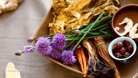 Medicinal-Plants-Roots