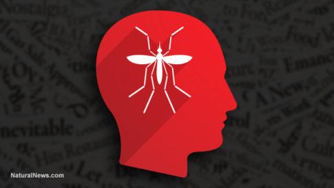 Zika-Mosquito-Human-Mind