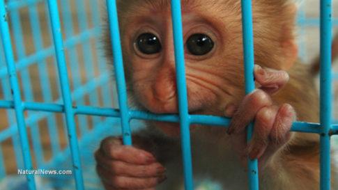 baby-monkey-cage