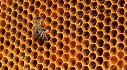 bees-hive